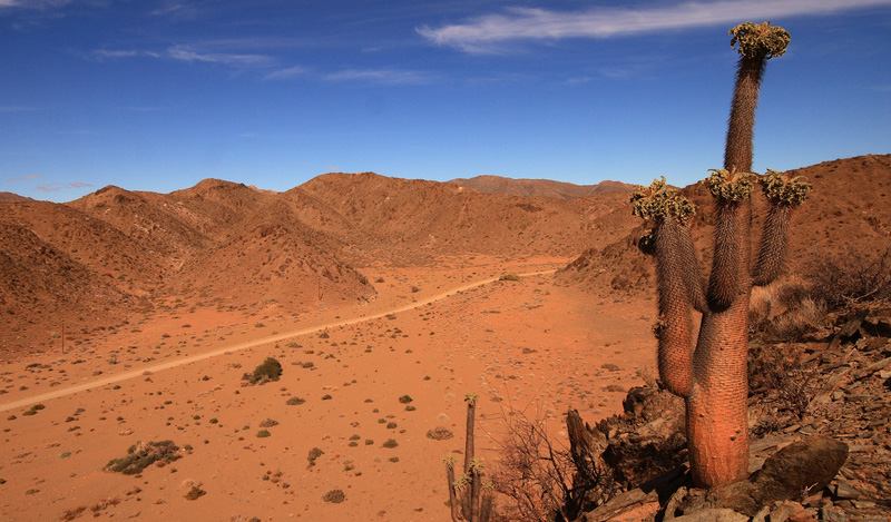 Half-Human Trees of the Richtersveld